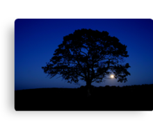 Moon rising over Lonely tree, Stewiacke Canvas Print