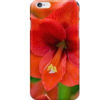 Delphinium Tangerine Dream  iPhone Case/Skin