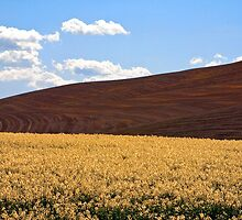 Palouse Hills by Tom Vaughan