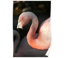 Avian Curves Poster