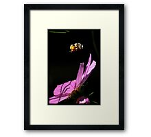 Fly By Bee.. Framed Print