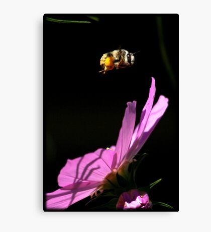 Fly By Bee.. Canvas Print