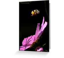 Fly By Bee.. Greeting Card