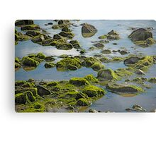 Uncovered Metal Print