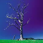 Valley Tree by Simon Hodgson