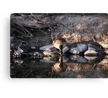 Mirror, Mirror... Canvas Print