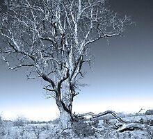 tree by budrfli