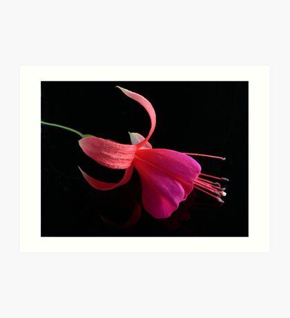 Fuchsia XV Art Print