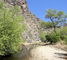 Desert Stream by Kathleen Brant