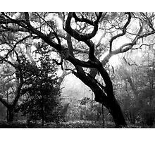 Whispering Oaks Photographic Print