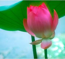 Lotus #28 by Janos Sison