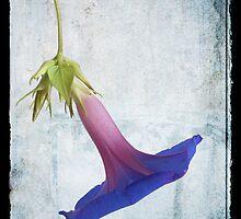 Ephemeral Beauty by Martie Venter