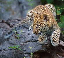 Leopard Cub Hideaway by Owed to Nature