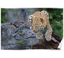 Leopard Cub Hideaway Poster