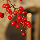 Berries by ArtInMotion