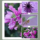 Pink, Purple And Green Photo Collage  by Sandra Foster