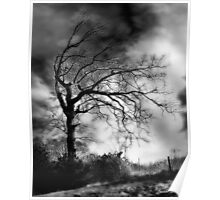 Spooky tree..... Poster