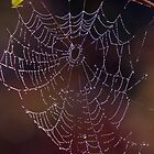 Jewelled Web by Neil Bygrave (NATURELENS)