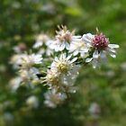 Wild Flowers of Fall by vigor
