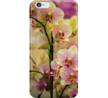 Orchid Idomeneo  iPhone Case/Skin