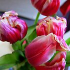 Pink Tulips by Emma Close