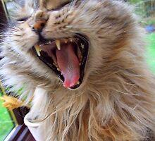 Milly Yawn by Emma Close