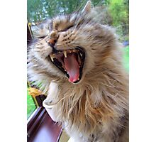 Milly Yawn Photographic Print