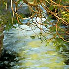 Cascade Cedars by Bill Morgenstern