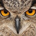 Owl eyes 2 by Gregg Williams