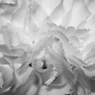 Delicate Chaos by Debbie Black