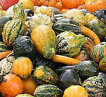 Fall Gourds  by Jim Caldwell