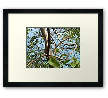 to err is the vine Framed Print