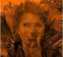 Orange Dilemma Photographic Print