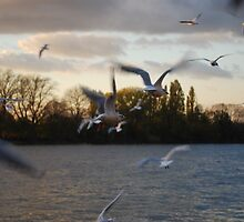 Gulls at Sunset by Claire Elford
