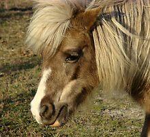 Pretty Pony by badbeeb