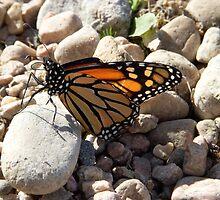 Broken Butterfly by Keith  Rabin Jr.