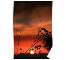 Templestowe sunsets Poster