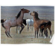 Playful Mustangs Poster