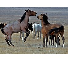 Playful Mustangs Photographic Print