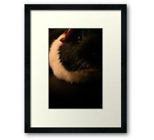 Mr. Snuggles Framed Print