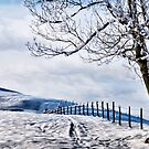 The Snow - The Fence - The Tree by Kurt  Tutschek