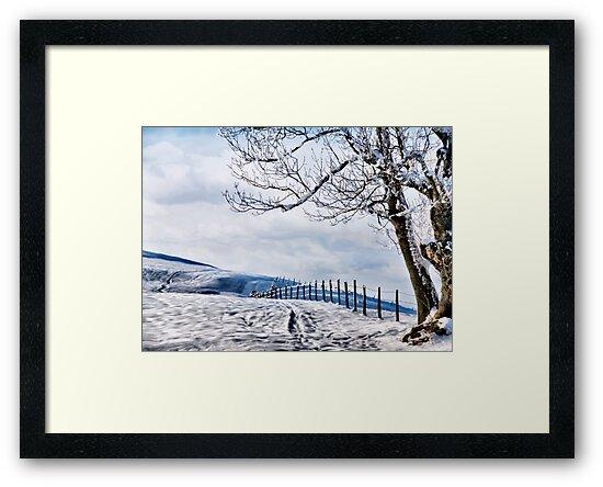 The Snow - The Fence - The Tree by Kurt  Tutschek