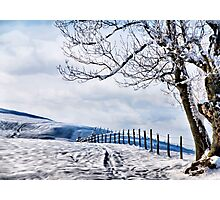 The Snow - The Fence - The Tree Photographic Print