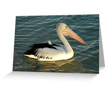 Pelican at Monkey Mia Greeting Card