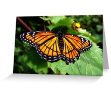 caught on camera monarch sleeping on the job Greeting Card