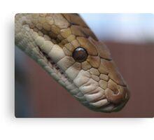 Scrub Python Canvas Print