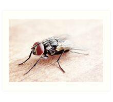Red-eye Fly Art Print