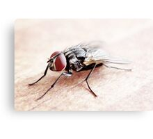 Red-eye Fly Canvas Print