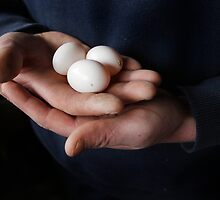 Limerick tumbler pigeon eggs by James  Horan