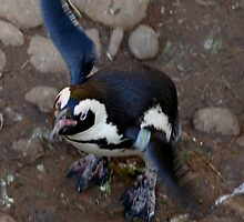 Penguin Flap by ApeArt